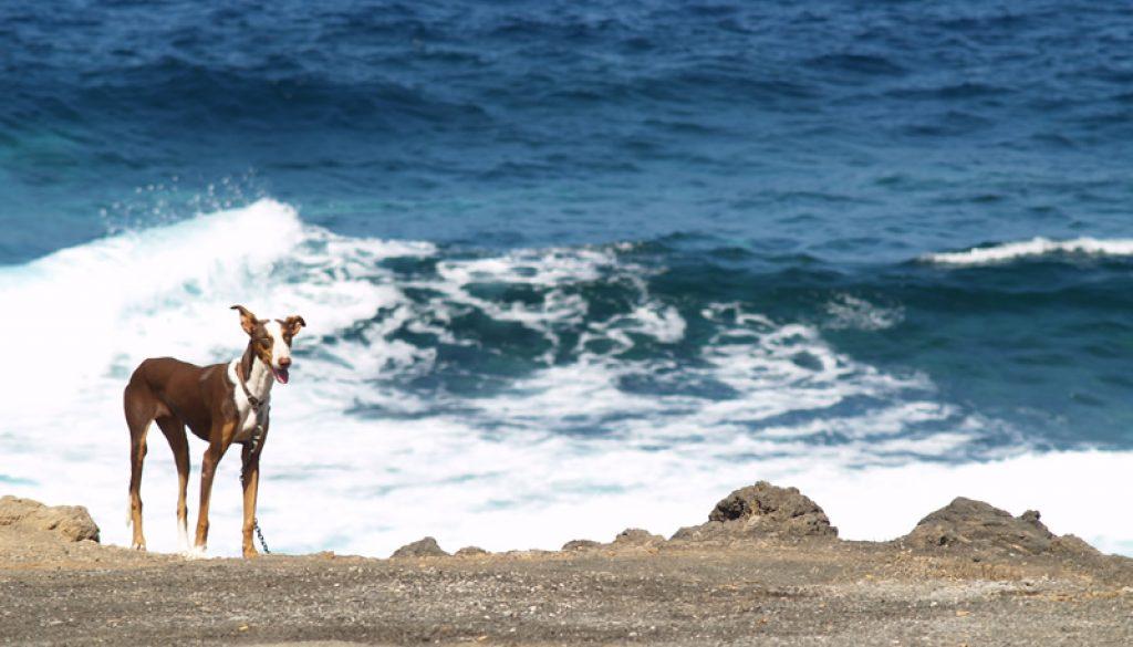 Alan Gandy – Neglected dog
